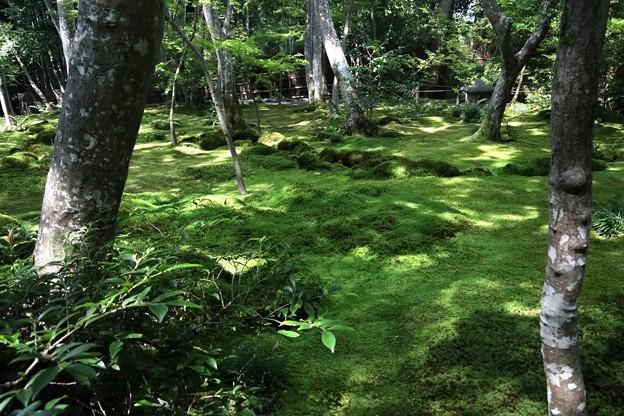 祇王寺苔の庭園11