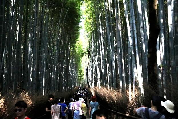 嵯峨野 竹林の道3