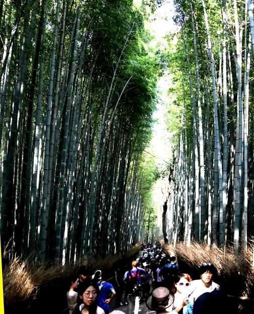 嵯峨野 竹林の道4