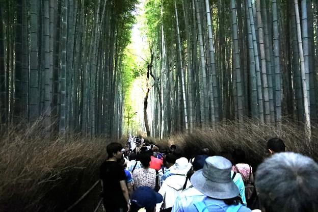 嵯峨野 竹林の道8