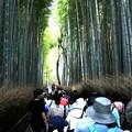 Photos: 嵯峨野 竹林の道8