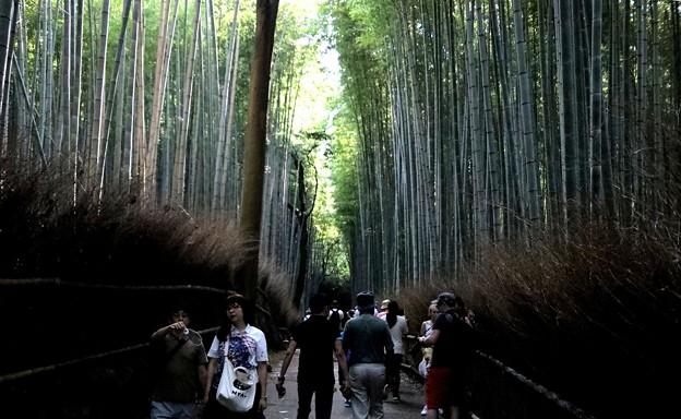 嵯峨野 竹林の道9