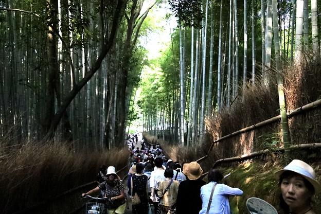 嵯峨野 竹林の道10