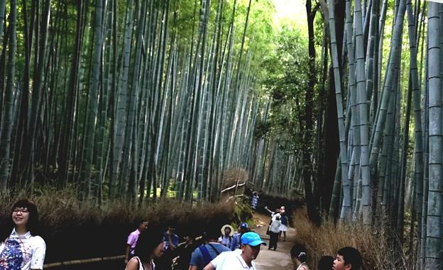嵯峨野 竹林の道11