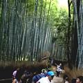 Photos: 嵯峨野 竹林の道11