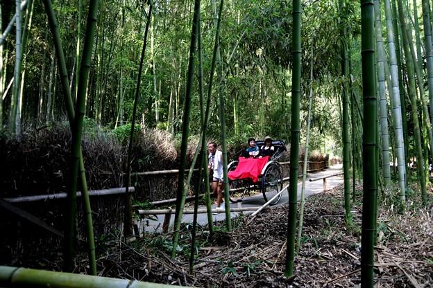 嵯峨野 竹林の道の人力車風景