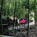 Photos: 嵯峨野 竹林の道の人力車風景