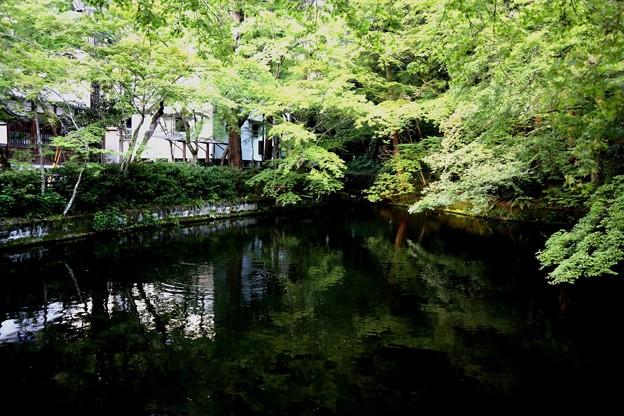 清水寺の池風景