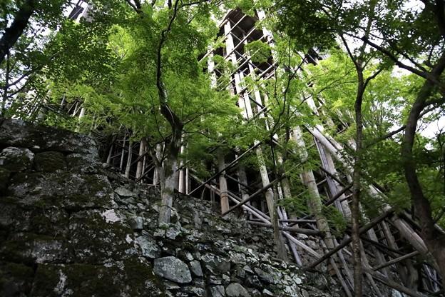 清水寺の支柱2
