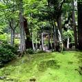 Photos: 南禅寺の庭園5