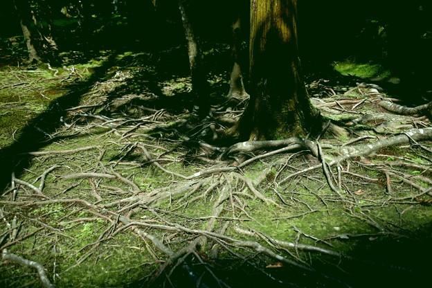 法然院の木のねばり