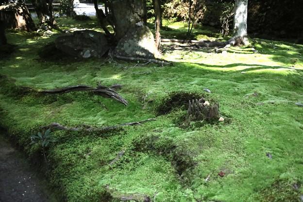 法然院の苔庭園4