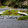 Photos: 法然院の石庭3
