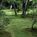 銀閣寺苔の庭園1