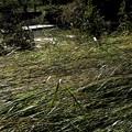 雨台風19号の痕跡 柳瀬川増水