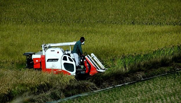 機械での稲刈り風景
