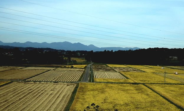 収穫期の田園風景