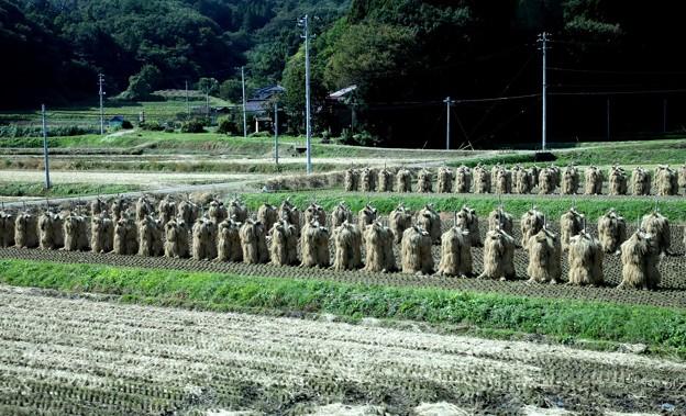 収穫後 田んぼ風景