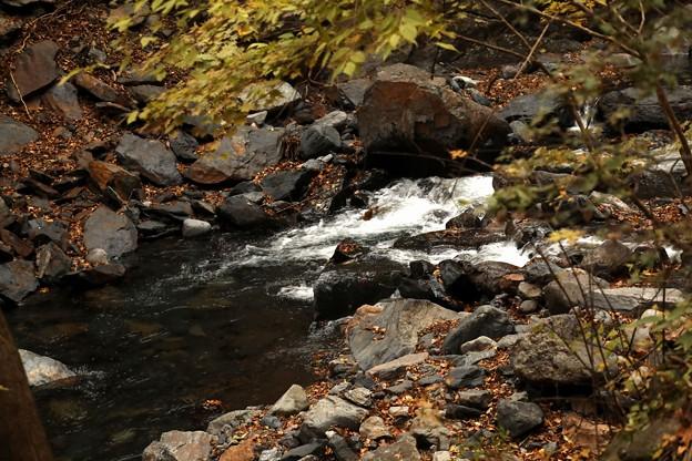 赤城白川の流れ