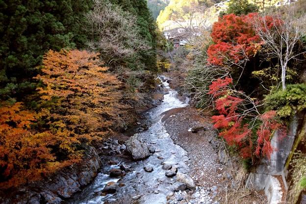 奥多摩川の紅葉2