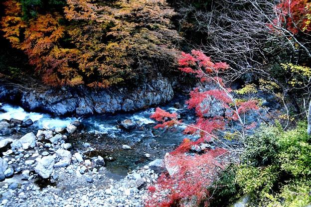 奥多摩川の紅葉3