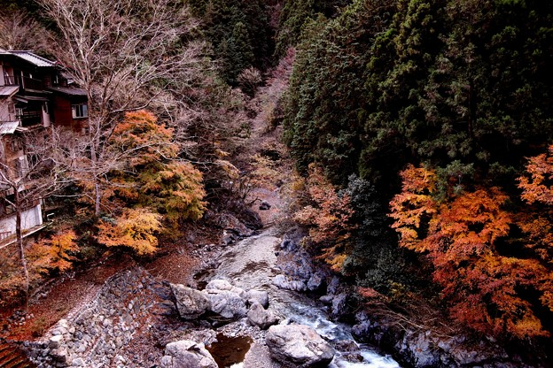 奥多摩川の紅葉4