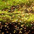 落葉への陽射し