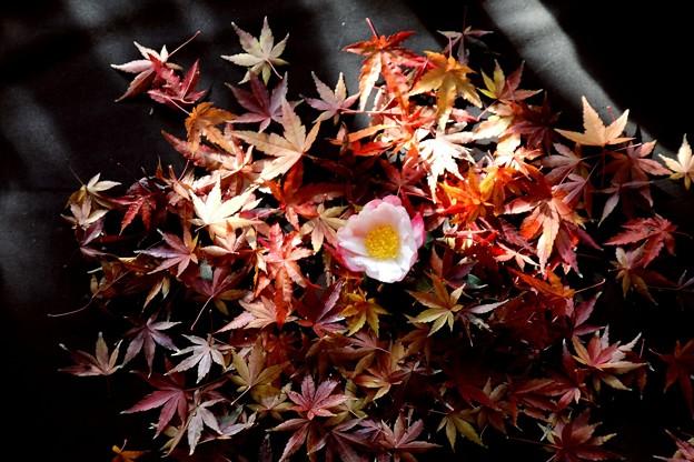 落葉と山茶花一輪