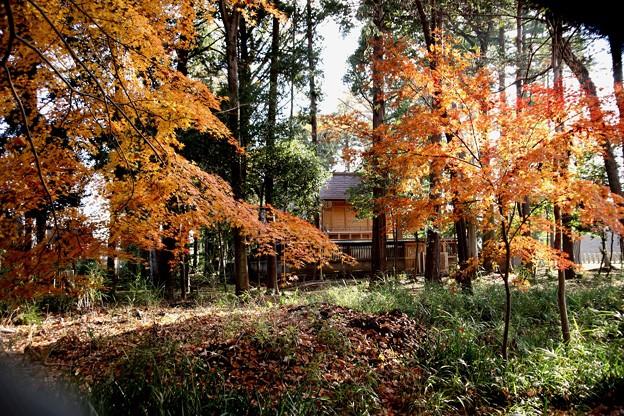 晩秋の神明社