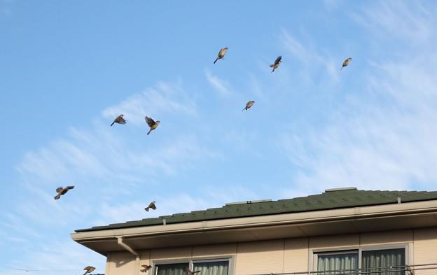 今日の雀の舞(20200106)