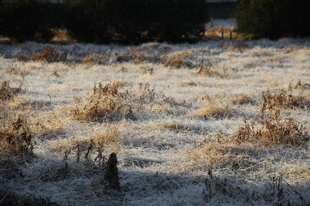 朝の霜風景
