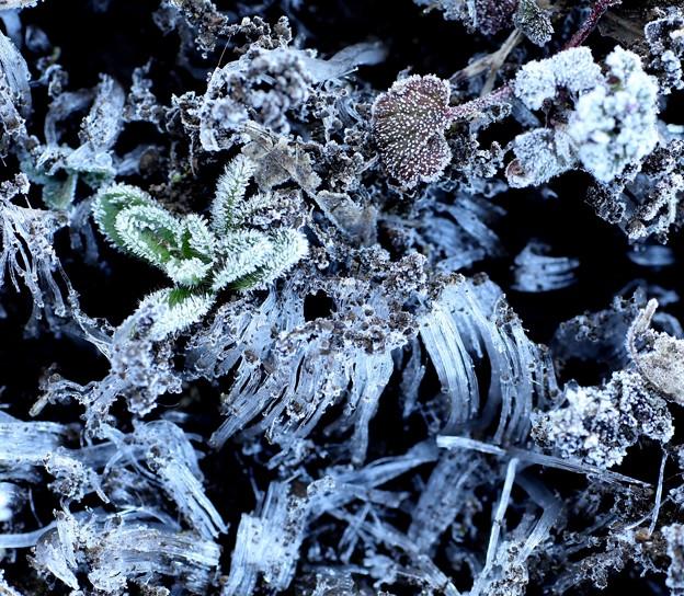 Photos: 今日の霜