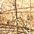 Photos: 雀の群