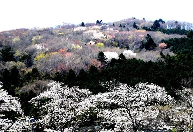 小川町道の駅よりの風景