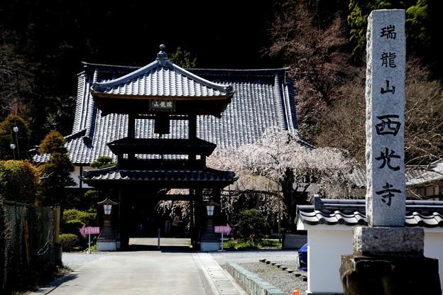 春の西光寺