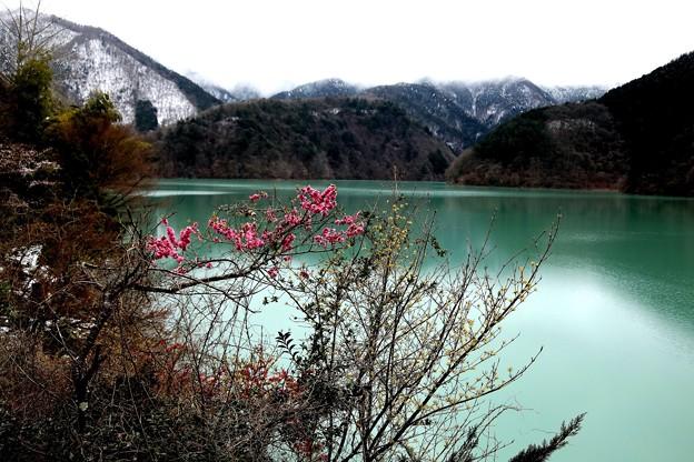 花咲く奥多摩湖
