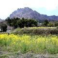 Photos: 菜の花と妙義山2