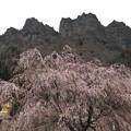 Photos: 桜の妙義山