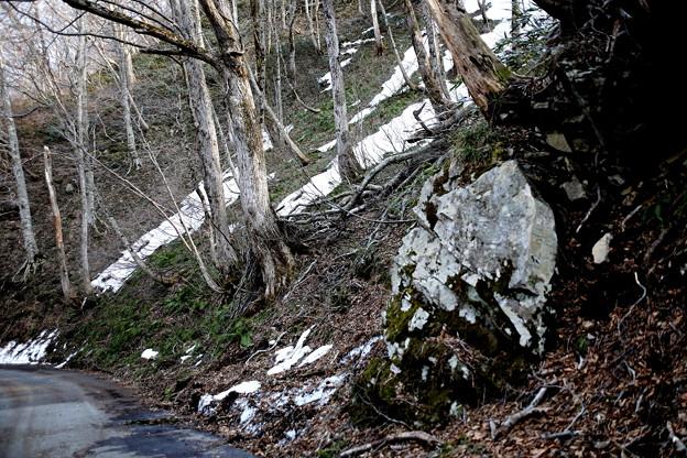 岩と残雪の林