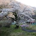 Photos: みなかの桜風景