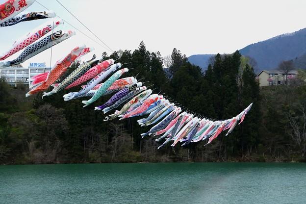 赤谷湖で泳ぐ鯉幟