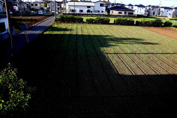 日の出の畑への影風景