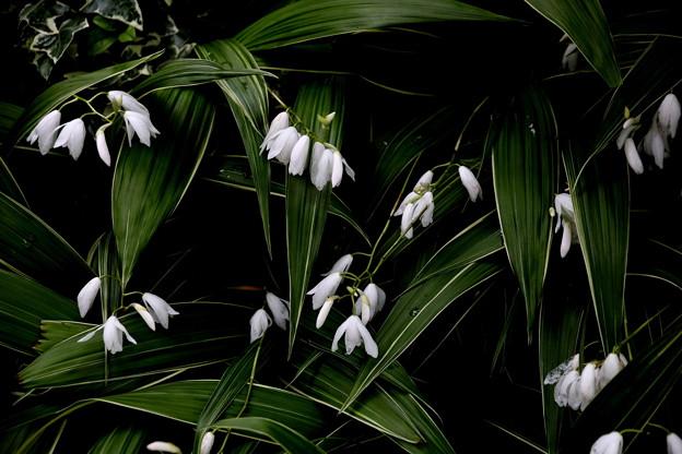白い花 名前不明
