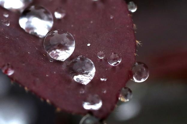 赤い葉の上の雫玉