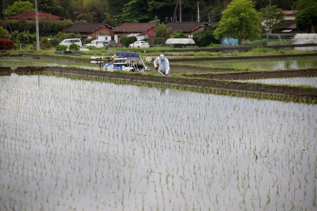 田植えの時期農村風景