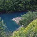 Photos: 菜の花と奥四万湖風景