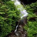 Photos: シャクナゲの滝2