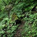 Photos: 小倉の滝への山道