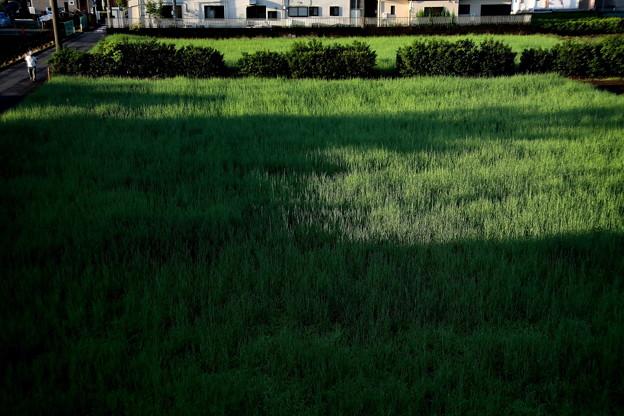 雨上がりの畑への朝日