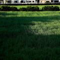 Photos: 雨上がりの畑への朝日